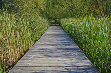 Hiking Path Through The Reeds