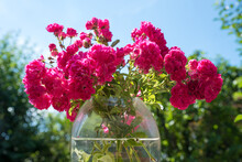 Posy With Pink Bush Roses, In A Glass Vase, Blurry Garden Background