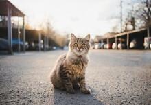 Homeless Cat Sitting On Street