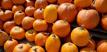 Pumpkins And Gourds At The Fall Farmers Market