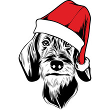 Wire Haired Dachshund Dog In Santa Hat For Christmas