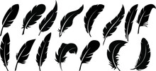 Black And White Background With Feathers