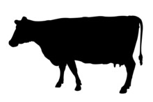 Cow In Silhouette On A White Background