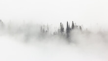 Mistery Scenery Of Winter Forest Surrounded By Morning Mist. Woodland In White Fog In Wintertime Condition. Landscape Of Trees In Cold Season.
