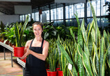 Portrait of friendly girl florist demonstrating sansevieria laurenti plants in pots at greenhouse store