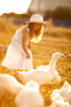 Beautiful Girl And Many White Geese In Nature In The Village