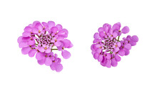 Set Of Isolated Elements For Floral Design. Purple Beautiful Flowers Of Iberia On White Background