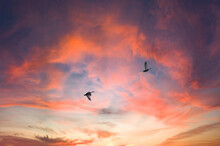 夕焼け空を飛ぶ2羽の鳥