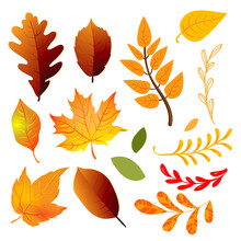 Autumn Yellow Leaves Set, Vector Illustration EPS 10