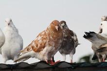 Group Of Birds In Flight
