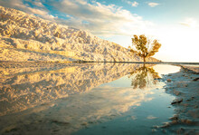 Golden Tree And Trevertines Reflections In Mineral Spring Water. Landscape Photography In Pamukkale. Dramatic Destination In Turkey.