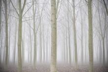 Bosco Autunnale Con Nebbia
