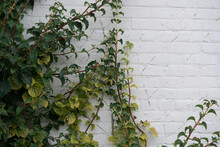 Plant Near A Painted Brick Wall