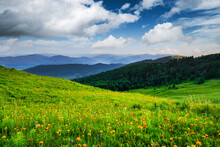 Amazing Scene In Summer Mountains. Lush Green Grassy Meadows In Fantastic Evening Sunlight. Carpathians, Europe. Landscape Photography