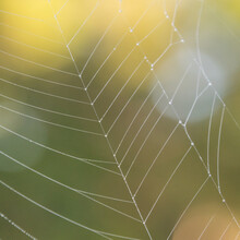 Dew Covering The Strands Of A Spider Web.