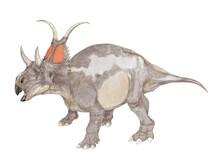 恐竜 ディアブロケラトプス 白亜紀後期の地層から発見されたかなり原始的なセントロサウルスの仲間であるとされる。フリルの上部の特徴的な角やカスモサウルスのような目の上の角をもつ雰囲気から「悪魔のケラトプス」という学名を持つ。頭部は前後に短く、ずんぐりした印象がある。体長は5メートルほどの中型種。