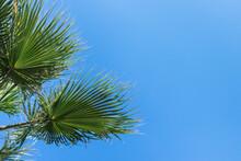 Green Palm Leaves In A Fan Shape Against A Clear Blue Sky