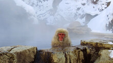 Monkey Sitting In A Hot Spring