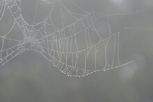 Raindrops On A Spider Web