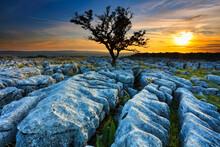 Lone Tree Growing In Limestone Pavement At Sunset, Twisleton Scar, Ingleton, Yorkshire Dales, England, UK.