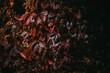 jesienne liście w czerwonym kolorze