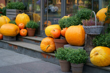 Autumn Decoration With Orange Pumpkins And Flowers In Pots Outside The Flower Shop. Composition For Halloween And Thanksgiving Day.