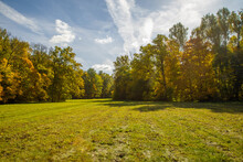 Sunny Autumnal Meadow And Yellow Forest On Its Edges