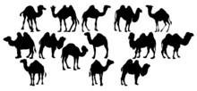 Vector Animal Illustration. Black Camel On A White Background.