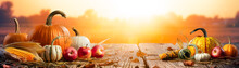 Pumpkins Apples And Corncobs On Wooden Harvest Table With Sunset Background - Thanksgiving And Harvest