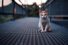 The Cat On The Black Iron Bridge Is Staring.