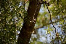Carolina Chickadee On A Tree Branch