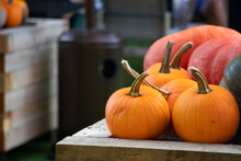 Outdoor Colorful Autumn Pumpkins And Squashes With Copy Space.