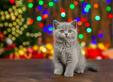 Little Gray Fluffy Kitten Sitting On The Background Of The Christmas Tree. Preparing For Christmas Concept. Place For Text