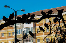 Silhouettes Of Pigeons On Wires, With Warm, Orange Light, In The Evening