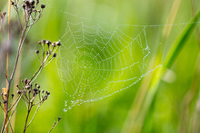 Close-up Of Dew Drops On A Spider Web.