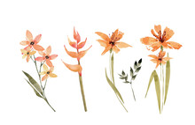 Botanical Set Of Orange Flowers And Plants. Watercolor Drawing, Hand Painted On White Background