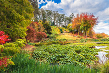 Colorful Australian Autumn At Mount Lofty Park By The Pond With Lily Pads In South Australia