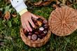 Ręka małej dziewczynki nad koszykiem pełnym owoców kasztanowca, kasztany w koszyku wiklinowym