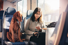 Young Woman Using Smart Phone While Sitting Next To Dog In Train