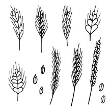 Spikelets Set. Vector Doodle Illustration For Printing, Backgrounds, Wallpapers, Covers, Packaging, Greeting Cards, Posters, Stickers, Textile And Seasonal Design. Isolated On White Background.