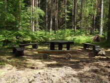 Intense Experience Of Nature Is A Hike Through The Ribnitz Forest And The Große Ribnitzer Moor Swampland, Mecklenburg-Western Pomerania, Germany,   In The Picture A Rustic Seat For A Break From Hiking