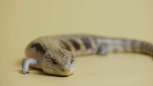 Lizard On A Surface
