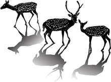Three Spotted Deers With Shadows