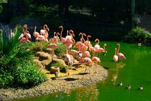 Pink Flamingos In A Bird Sanctuary