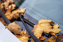 Fallen Yellow Autumn Leaves On The Windshield And Hood Of The Car, Autumn Foliage, Transport