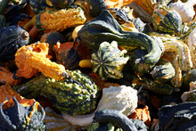 Pile Of Autumn Gourds For Sale At The Farm Market