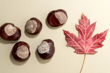 Chestnuts With Autumn Leaf