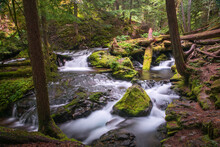 Panther Creek Falls Columbia Gorge In Moss Ferns And Forest