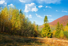 Autumnal Nature Scenery In Mountains. Birch Trees In Colorful Foliage On The Meadow. Primeval Beech Forest In Fall Foliage On The Hill. Warm Sunny Day With Fluffy Clouds On The Sky