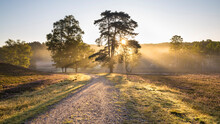 Footpath In Fischbeker Heide Reserve At Foggy Sunrise